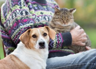 National Pet Month Image